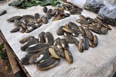 Shell Market Fresh Food Thailand Stock Photo