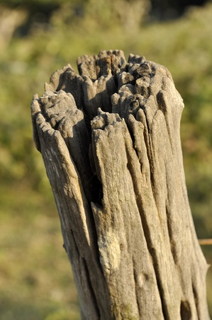 Wood Decay Outdoor Nature Timber Old