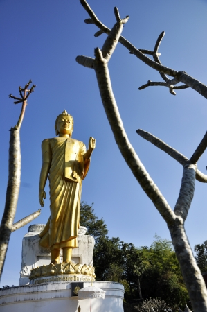 Big Statue Buddha Stand Outdoor Branch