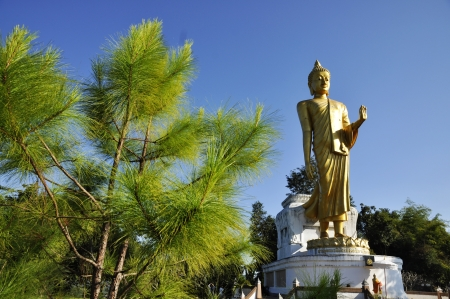 Big Statue Buddha Stand Outdoor Pine