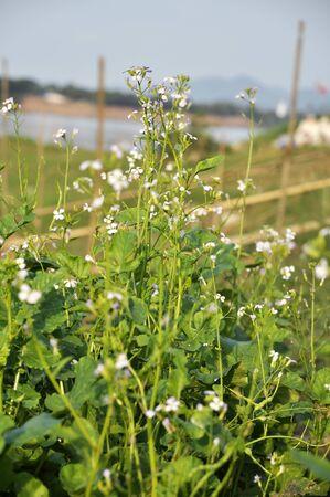 Kale Farm Plant Garden Flower Vegetable Stock Photo