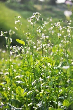 Kale Garden Flower Vegetable Farm Plant Stock Photo