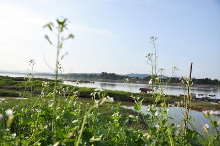 Kale Vegetable Plant Garden Flower River Stock Photo - 14538886