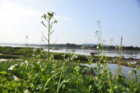Kale Vegetable Plant Garden River Flower Stock Photo