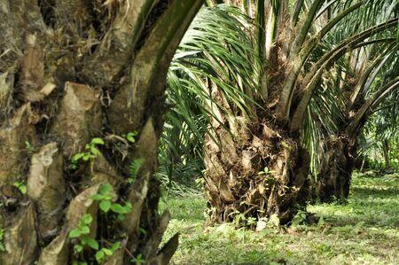 Palm Crop Day Outdoor Farm