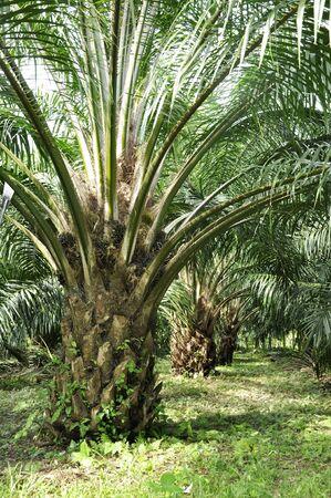 Palm Day Outdoor Farm Crop