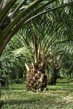 Palm Outdoor Farm Crop Day