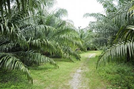 Palm Outdoor Farm Crop Way