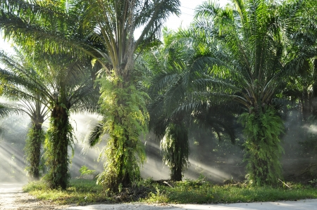 Palm Day Outdoor Fog Light Farm photo