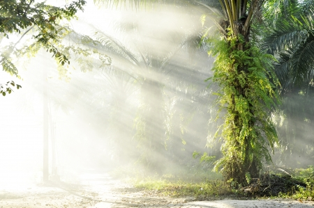 Palm Fog Light Farm Day Outdoor Stock Photo