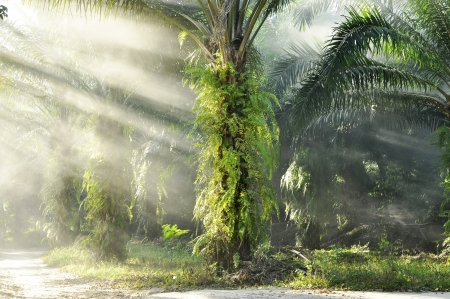 Palm Light Day Outdoor Fog Farm photo