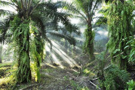 Palm Light Fog Day Outdoor Farm Stock Photo