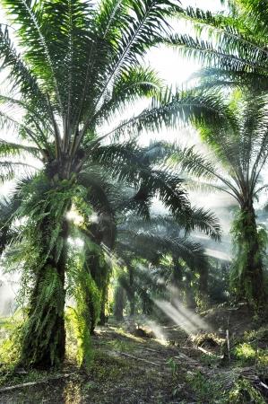Palm Light Fog Farm Day Outdoor