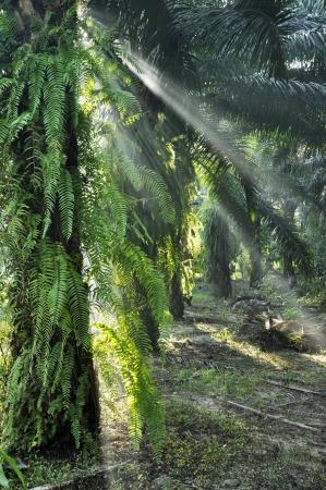 Palm Light Fog Outdoor Farm Day Stock Photo