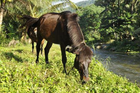 Horse Grass Field Brown Eat Stock Photo - 17421745