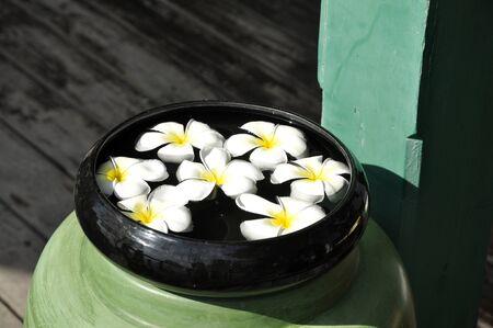 Frangipani Water Spa Bowl Float Stock Photo