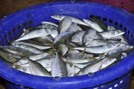 Mackerel Fish Food Fresh Basket Thailand