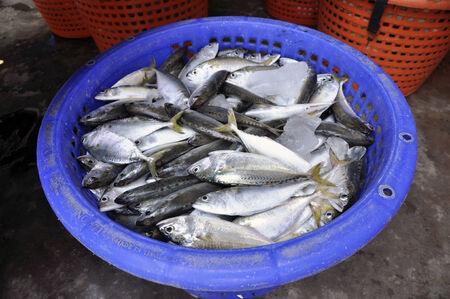 Mackerel Fish Food Fresh Thailand Basket