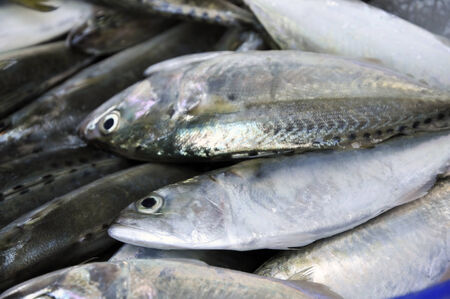 Mackerel Fish Food Fresh Thailand Stock Photo
