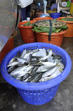 Mackerel Fish Fresh Basket Thailand