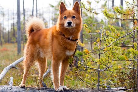 jachthond op de omgevallen boom