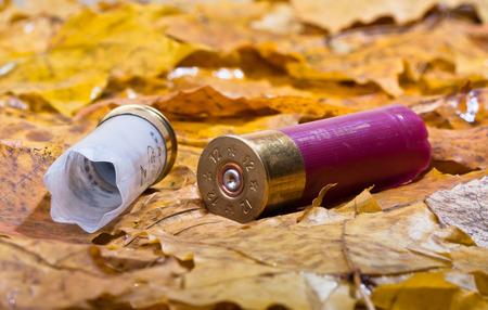sports shell: two shotgun cartridges on fallen leaves