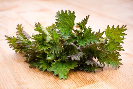 stinging  nettle: Stinging nettle ( Urtica dioica ) on wooden table Stock Photo