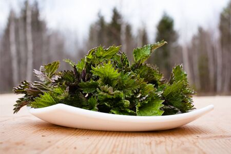 urtica: Stinging nettle ( Urtica dioica ) on wooden table Stock Photo