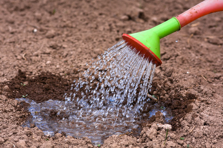 watering the soil with small seedling