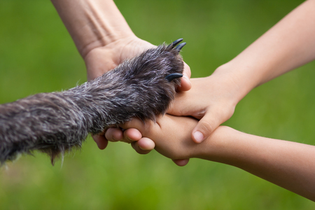 hands of family and paw of dog, which also a family member on green summer background
