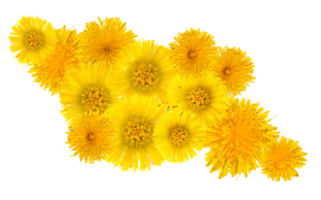 yellow group of flowers dandelion and foalfoot on white background