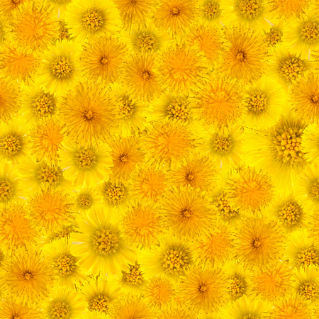 yellow background of dandelion flowers and foalfoot, seamless Stock Photo
