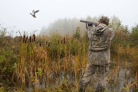 the hunter aims at a duck that has risen from a thicket of reeds in a swamp on a foggy morning 版權商用圖片