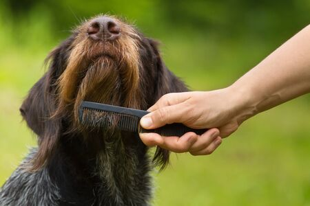 Woman with a comb combing hair on the dog face 스톡 콘텐츠