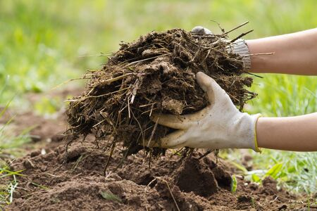 the hands of the farmer put manure on the plowed soil