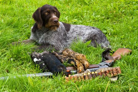 the hunting dog is next to the hunting equipment and trophies (three downed grouse) after the hunt