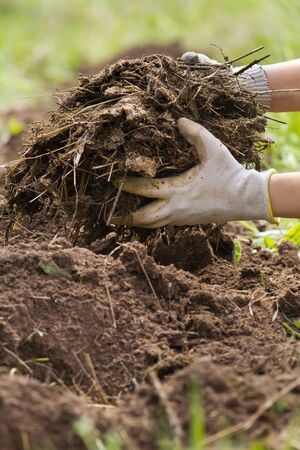 the hands of the farmer put manure to improve the plowed soil