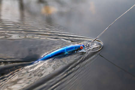 blue wobbler tied to a fishing line quickly floats on the surface of the water in autumn
