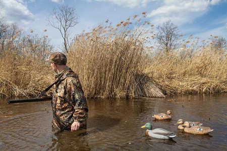 A hunter walks through a reed-covered lake in waist-deep water. He pulls plastic duck decoys tied to a string behind him. Stock Photo