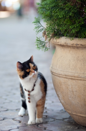 Cat with orange eyes wearing necklace with brown gems photo