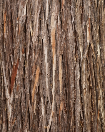 Wood texture – cypress bark