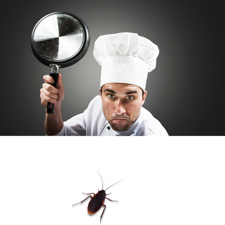 Humorous portrait of a chef attacking a cockroach concept