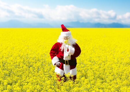 Christmas Santa Claus sniffing the flowers in blooming yellow field. Spring vacation concept. 写真素材