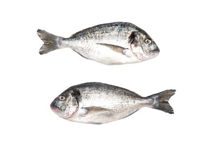 Two fresh Dorados fish isolated on white background. View from above.