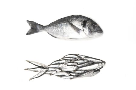 Dorado fish and fish silhouette assembled from small fish. Isolated on white, view from above.