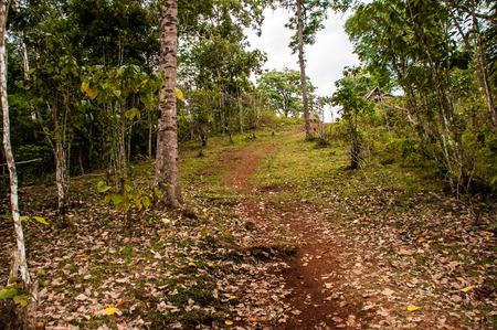 Nature in woods Pakse Laos