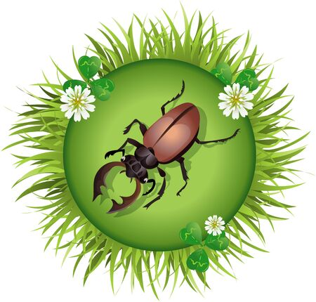 stag beetle: Insect and summer nature icon. stag beetle in a clearing in a circle around flowers