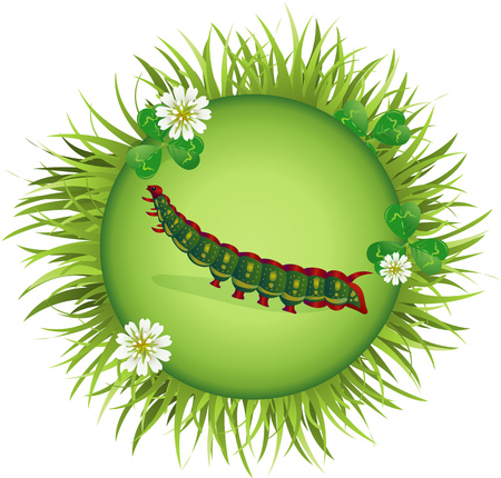sedge: Insect and summer nature icon. caterpillar  in a clearing in a circle around flowers