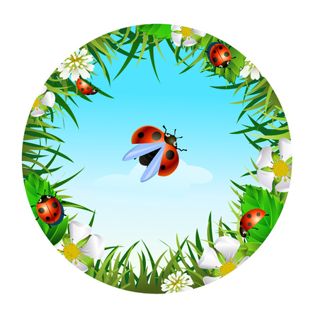sedge: Insect and summer nature icon. ladybird on sky background  in a clearing in a circle around flowers