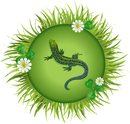 lizard in field: Insects and summer nature icon. lizard on a meadow